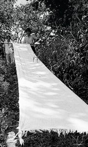 Encarnación Cala en el proceso de estirado. Fotografía: Carlos Eslava, 1989