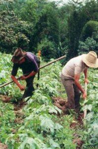 Cultivadores de algodón. Fotografía Beatriz Granados